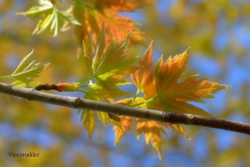 Twitter spring leaves