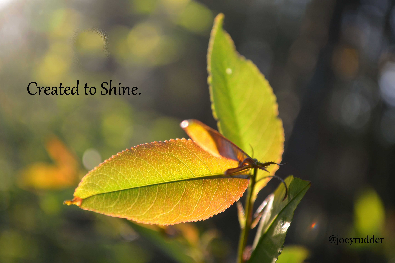 twitter created to shine